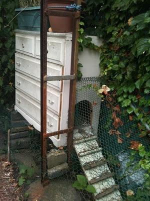 carolina farms & estates >> backyard chickens? are you thinking of